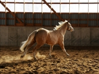 equine-action-shot